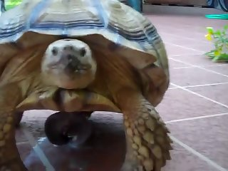 Animal Took Footage Of His Girl Lined In Horse Liquid Body Substance And Slutty Girl Set Back On The Bench Breathless. Turtle named Danatello were at the position of producer. .