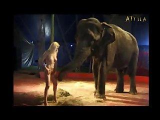 Milly Amorim 2795 3115 Elephant (part 13)